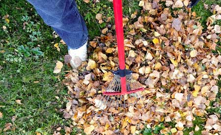 leaf-removal-stillwater-ok
